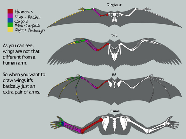 Dragon Anatomy | Article by Vorthos Mike