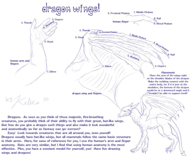 Dragon Anatomy Article By Vorthos Mike